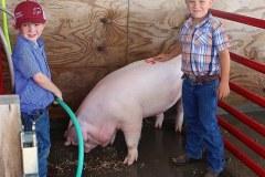fair-pig-wash-3.10.20
